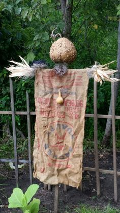 Warty gourd head scarecrow made by Amy Duncan Winchester, IL.