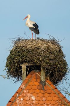 A stork stands on its nest in Bavarian town of Straubing