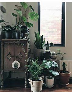 welche zimmerpflanzen brauchen wenig licht blumen pinterest badezimmer pflanzen und baden. Black Bedroom Furniture Sets. Home Design Ideas
