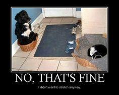 Poor puppy! Lol