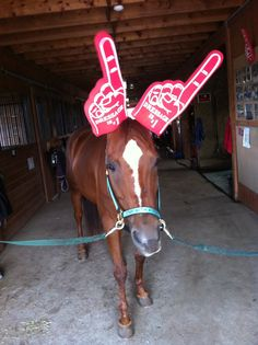 Do you LIKE Cocoa's Dressage is #1 Foam Finger hat? We are so excited that Dressage has started in London today, SmartPaker Kristina just couldn't resist showing off Cocoa's cutness and her love of the discipline. Catch some of the Dressage coverage on MSNBC today from 1:30-2:30 PM (ET) or watch it online at nbcolympics.com.