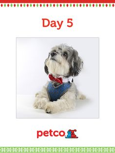 Here is today's 12 Days of Pinterest featured image (12/7/2012). Pin this Doggy Bowtie image to one of your boards for a chance to win a 500 dollar Petco shopping spree, plus 500 dollar Petco Gift Card for a Petco Foundation Shelter/Rescue of your choice. Winner will be announced tomorrow (12/8/2012) between 12 pm and 5 pm Pacific time.