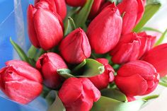 Spring Tulips For You! | Flickr - Photo Sharing!