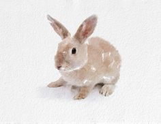 Hare Watercolor Painting Art