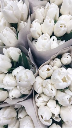 Frühling Wallpaper, Flower Phone Wallpaper, Iphone Background Wallpaper, Pastel Wallpaper, Aesthetic Iphone Wallpaper, Aesthetic Wallpapers, Cream Aesthetic, Flower Aesthetic, White Flowers