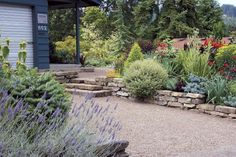Plant Ideas Driveway Landscaping