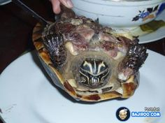 It's a f*cken turtle!!! One of the Ninja turtles won't be in the next movie