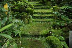 神社仏閣などの歴史旧跡では、しばしば美しい苔を目にする事ができます。 苔愛好家の間では苔を楽しむための時間を「苔時間」と言うそうなのですが、こんな場所で過ごす苔時間は、神聖で荘厳な雰囲気に包まれて、身も心も清められそうですね。