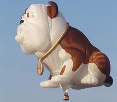 doggy balloon.  too cute