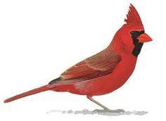 Resultado de imagen de bird