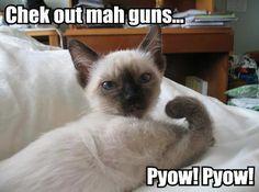 Check out mah guns... Pyow! Pyow! #funnycats