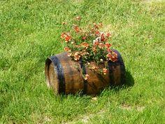 Spring flowers in old wine cask.