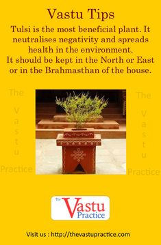 Tulsi is the most beneficial plant. It neutralises negativity and spreads health in the environment. It should be kept in the North or East or in the Brahmasthan of the house. Contemporary Cottage, Contemporary Chairs, Contemporary Apartment, Contemporary Interior Design, Contemporary Bedroom, Contemporary Wallpaper, Contemporary Chandelier, Contemporary Office, Contemporary Architecture