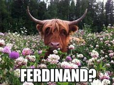Ferdinand!