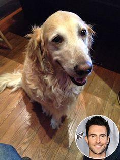 Adam Levine's sweet pooch, Frankie.