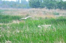 高清:探訪薑山濕地公園 垂釣勝地飛鳥天堂