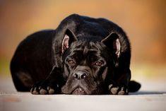 ¿Qué es la leptospirosis en perros? - http://befamouss.forumfree.it/?t=70626527#