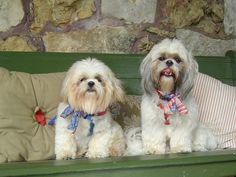 Shih Tzu and Lhasa Apso are two long coated miniature dog breeds which are usually confused with one another. Well,…