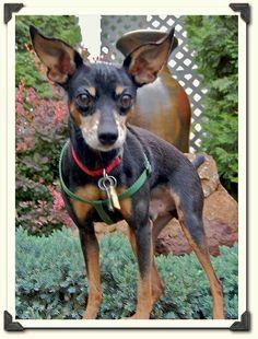 Monty Garden, Dogs, Animals, Garten, Animales, Animaux, Lawn And Garden, Pet Dogs, Gardens