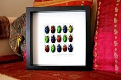 Artframe with real insects : Topquality display with beautiful flowerbeetles of the world by Alanscollectibles on Etsy