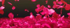 Rose Petals GIF