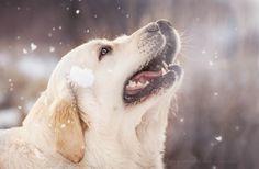 winter by Ada Sanakiewicz on 500px