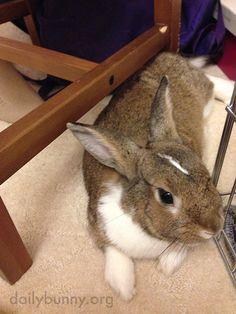Virtuoso Bunny Plays the Piano 2