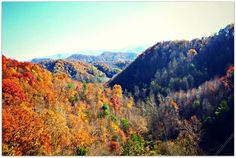 Photo of Navitat Canopy Adventures - Asheville - Barnardsville, NC, United States. The horizon