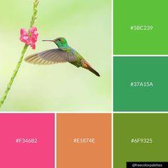 Hummingbird | Nature | Green | Spring |Color Palette Inspiration. | Digital Art Palette And Brand Color Palette.