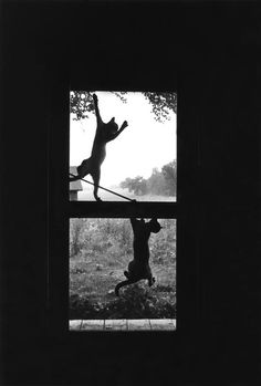 Cats on Screen Door, 1969 Richard Kalvar.I had two kittens I used to peel off the screen door. Photo Animaliere, Photo Chat, I Love Cats, Cute Cats, Funny Cats, Crazy Cat Lady, Crazy Cats, Here Kitty Kitty, Black And White Pictures