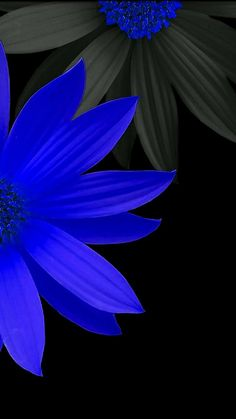 Blue daisy wallpaper ad idea flower wallpaper, wallpaper и c Daisy Wallpaper, Trendy Wallpaper, Cute Wallpapers, Wallpaper Backgrounds, Cellphone Wallpaper, Iphone Wallpaper, Exotic Flowers, Beautiful Flowers, Blue Daisy