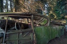 Rust in peace: Haunting pictures of the Belgian 'car graveyard' where ...