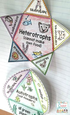 Food chains and food webs covers ks2 science food chains and food i love this ecosystem interactive notebook for my students it contains food webs food sciox Choice Image