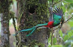 Quetzal Sanctuary - Costa Rica