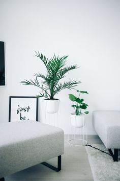 Adding life to the home