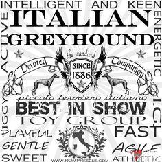 Italian Greyhound since 1886, IG shirt, Iggy shirt, italian greyhound shirt