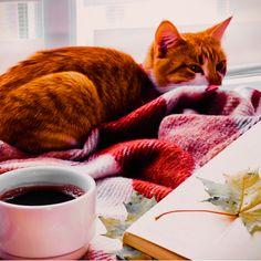 Design Art, Cats, Animals, Gatos, Animales, Animaux, Animal, Cat, Animais