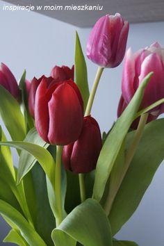 inspiracje w moim mieszkaniu: Wiosenne kwiaty cebulowe w szklanych naczyniach Vases, Flowers, Plants, Plant, Royal Icing Flowers, Vase, Flower, Florals, Floral