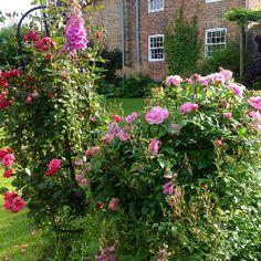 My garden - Gillian Craven