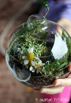 """Terrariums in glass orbs (ornaments). """"I know a bank where the wild thyme blows, Where oxlips and the nodding violet grows. Quite overcanopied with luscious woodbine, With sweet musk-roses and with eglantine."""""""