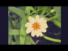 A short video for meditation. Enjoy the calming music and picture gallery of flowers. Calming Music, Best Blogs, Finding Yourself, Nature, Flowers, Meditation, Pictures, Photography, Fun Ideas
