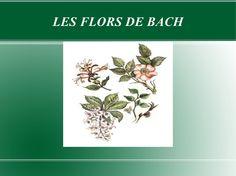 les-flors-de-bach by myss_ana via Slideshare