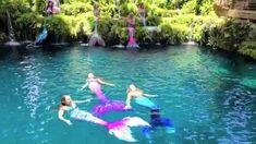 Mermaid Videos, Mermaid Gifs, Mermaid Swim Tail, Mermaid Swimsuit, Mermaid Swimming, Mermaid Lagoon, Mermaid Pictures, Real Mermaids, Mermaids And Mermen