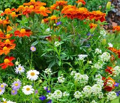 Cele mai rezistente flori la umbra - Casa și Grădina Garden Projects, Planting Flowers, Mai, Diy And Crafts, Wisteria, Home And Garden, Herbs, Gardening, Vise