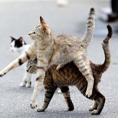.cats calisthenics.