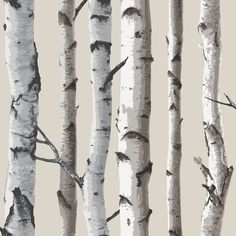 Fine Decor Birch Tree Wallpaper Natural Beige / Cream - Wallpaper from I love wallpaper UK Birch Tree Wallpaper, Look Wallpaper, Stone Wallpaper, Embossed Wallpaper, Wallpaper Samples, Peel And Stick Wallpaper, Pattern Wallpaper, Feature Wallpaper, White Wallpaper