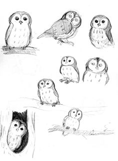 I think I'm gonna practice drawing this owl until I get it right just because he's so darn cute.
