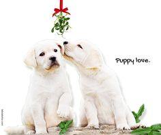Labrador Quotes, Labrador Retriever, Dogs, Animals, Labrador Retrievers, Animales, Animaux, Doggies, Labrador