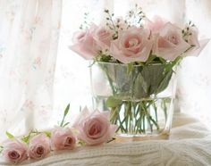 Pink roses are a real treasure.