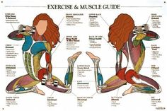 Exercises for Muscles Guide